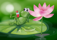 A frog above the waterlily Royalty Free Stock Photos