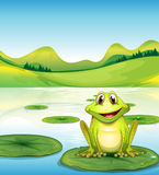 A frog above the waterlily in the pond. Illustration of a frog above the waterlily in the pond Royalty Free Stock Image