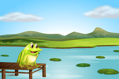 A frog above the wooden bridge Royalty Free Stock Image
