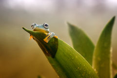 Frog activities. A frog in the morning royalty free stock images