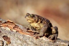 Frog. The amphibian on nature stock image