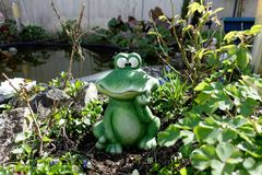 Frog, Amphibian, Toad, Plant stock photography