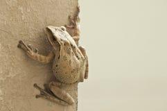 Frog animal life Stock Images