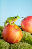 Frog on apple Royalty Free Stock Photos