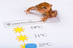 Frog as a weather prophet makes the weather forecast, German Version Stock Image