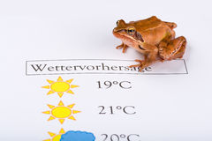Frog as a weather prophet makes the weather forecast, German Version Stock Photos