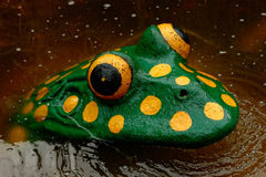 Frog atraction Stock Photography