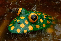 Frog atraction Stock Image