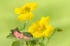 Frog baby on flowers. Little frog baby sleeping on yellow flowers Royalty Free Stock Photo