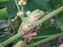 Frog Background Stock Image
