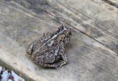 Frog backview Stock Photos