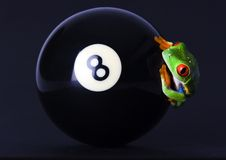 Frog on the ball Stock Images