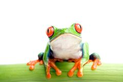 Frog on bamboo stock images