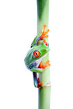 Frog on bamboo isolated Stock Photo