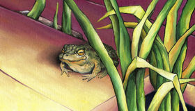 Frog, basking in the sun. Stock Images