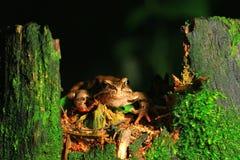 Frog basking in sunlight royalty free stock image
