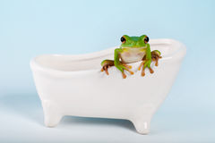 Frog on bath royalty free stock photos