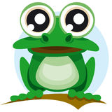 Frog with big eyes Stock Photos