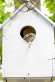 Frog in birdhouse. Stock Photography