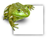 Frog with blank sign Royalty Free Stock Image