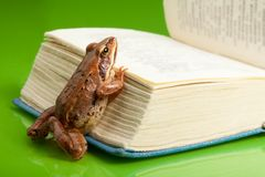 Frog with the book Stock Images