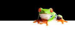 Frog border Royalty Free Stock Photos