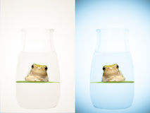 Frog in the bottle Royalty Free Stock Photos