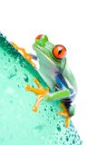 Frog on bottle isolated white Royalty Free Stock Photos