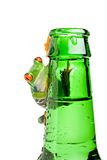 Frog on a bottle isolated on white Stock Photos