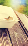 Frog in the box Royalty Free Stock Photography
