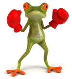 Frog boxing Royalty Free Stock Photos