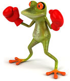 Frog boxing Stock Photos