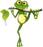 Frog on a branch Royalty Free Stock Image
