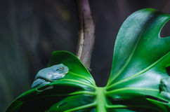 A frog on a branch stock images