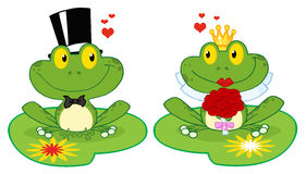 Frog bride and groom on lily pads Stock Photos
