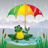 Frog with a bright umbrella. Frog with colorful umbrella sitting in a puddle in the rain Royalty Free Stock Photography