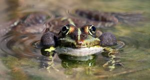 Frog bubbles Stock Images