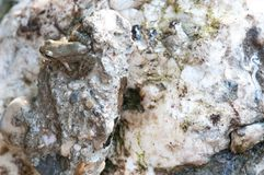 Frog camouflaging. Camouflage frog on a white rock Royalty Free Stock Photography