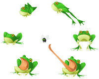 Frog Cartoon Design Element Set. Isolated Royalty Free Stock Images