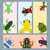 Frog cartoon tropical animal cards cartoon amphibian mascot character wild vector illustration. Royalty Free Stock Photo