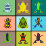 Frog cartoon tropical animal cards cartoon amphibian mascot character wild vector illustration. Royalty Free Stock Photo