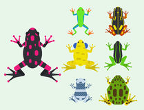 Frog cartoon tropical animal cartoon amphibian mascot character wild vector illustration. Stock Photo