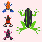 Frog cartoon tropical animal cartoon amphibian mascot character wild vector illustration. Frog cartoon tropical animal cartoon nature icon funny and isolated Stock Photography