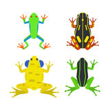 Frog cartoon tropical animal cartoon amphibian mascot character wild vector illustration. Stock Images