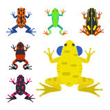 Frog cartoon tropical animal cartoon amphibian mascot character wild vector illustration. Frog cartoon tropical animal cartoon nature icon funny and isolated Royalty Free Stock Photo