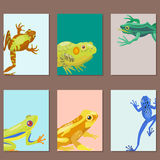 Frog cartoon tropical animal cartoon nature cards icon funny and isolated mascot character wild funny forest toad Royalty Free Stock Image