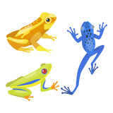 Frog cartoon tropical animal cartoon nature icon funny and isolated mascot character wild funny forest toad amphibian. Vector illustration. Graphic ecosystem vector illustration
