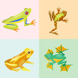 Frog cartoon tropical animal cartoon nature icon funny and isolated mascot character wild funny forest toad amphibian Stock Images