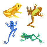 Frog cartoon tropical animal cartoon nature icon funny and isolated mascot character wild funny forest toad amphibian Stock Photo
