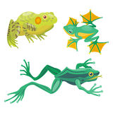 Frog cartoon tropical animal cartoon nature icon funny and isolated mascot character wild funny forest toad amphibian Royalty Free Stock Photos